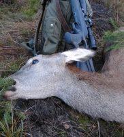 Na jelenie z podchodu