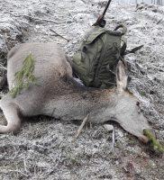 Zimowe polowanie na łanie